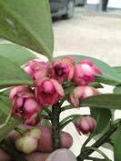 女童因好奇摘吃自家院中野生植物花朵 中毒身亡